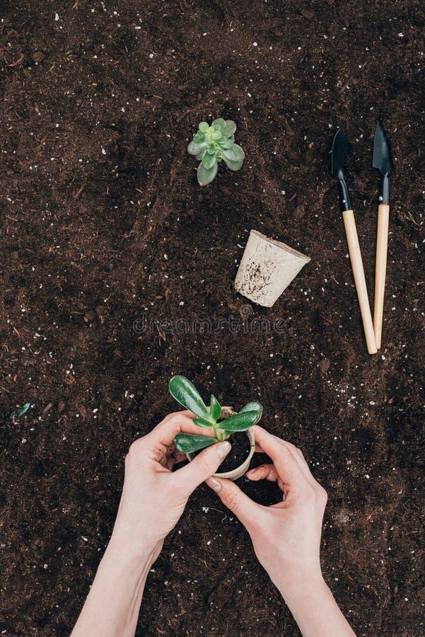 Manos Que Sostienen La Planta Verde Y La Maceta Sobre La Tierra Con
