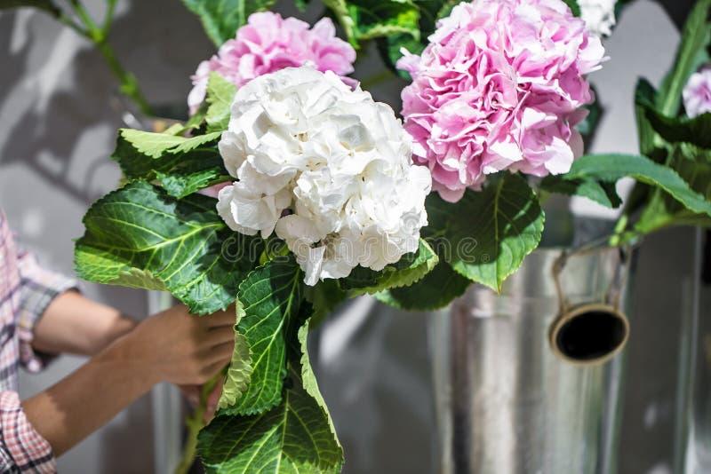Manos que sostienen una flor de la hortensia en una floristería imagenes de archivo