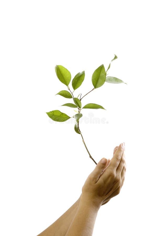 Manos que sostienen una planta fotografía de archivo libre de regalías