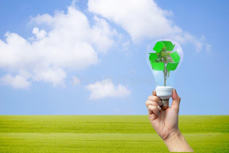 Manos reciclables del ambiente que sostienen la bombilla con imagen de archivo libre de regalías