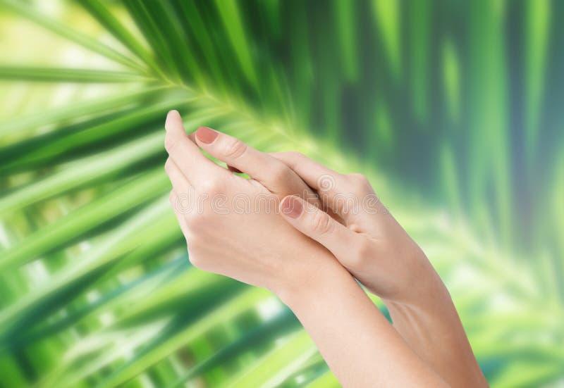 Manos suaves femeninas de la piel foto de archivo