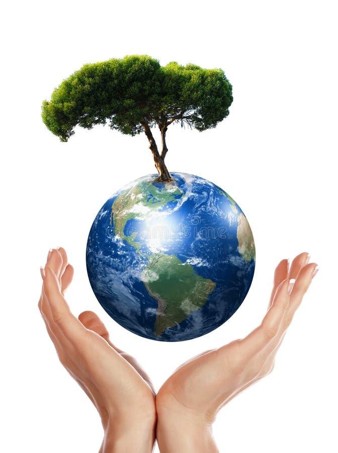 Manos, tierra y el árbol ilustración del vector