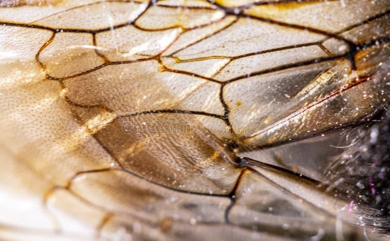 Manosee la abeja cercana para arriba del pelo amarillo y negro en la parte posterior fotos de archivo libres de regalías