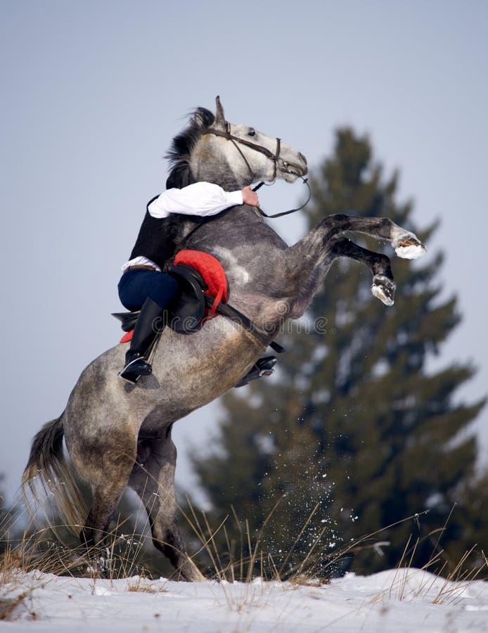 manridninghäst som är utomhus- i vinter arkivfoto