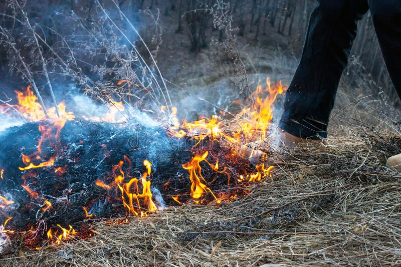 Mans foot puts out fire. Grassfire extinguishing concept. Boot trample down campfire near forest royalty free stock photography