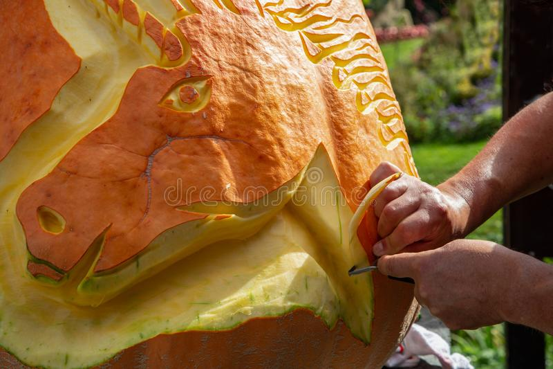 Mans Hände nah Carve Kürbiskinat im Herbsturlaub stockfoto