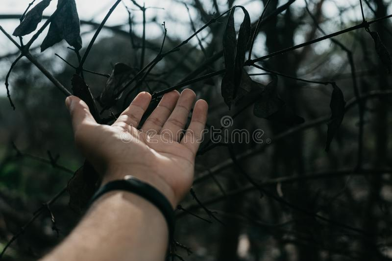 Mans hand på trädfilialer och sidor royaltyfri bild