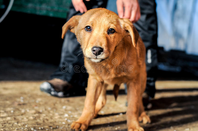 Mans hand stroking the abandoned dog stock images
