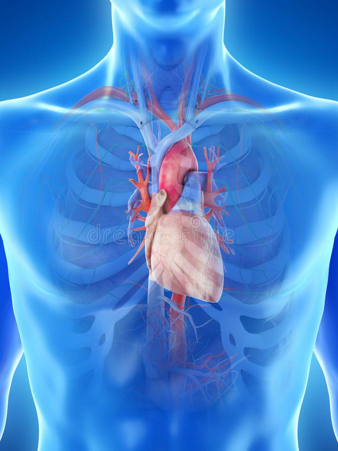 A mans heart. 3d rendered medically accurate illustration of a mans heart stock illustration