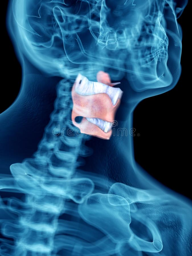 A mans larynx. 3d rendered medically accurate illustration of a mans larynx royalty free illustration