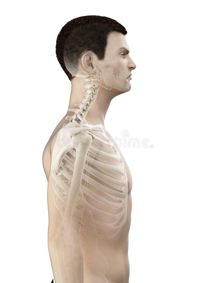 A mans neck. 3d rendered medically accurate illustration of a mans neck royalty free illustration