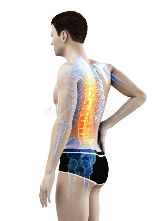 A mans painful back. 3d rendered medically accurate illustration of a mans painful back stock illustration