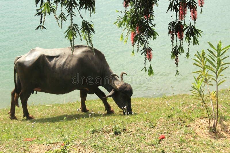 Mansar Lake,(kashmir). royalty free stock images