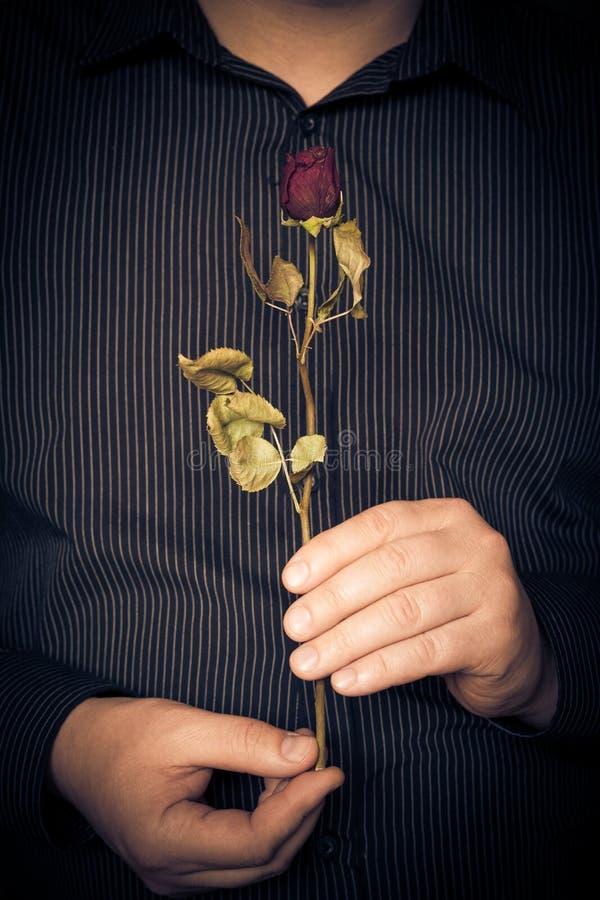 Manskjorta som rymmer den röda rosen royaltyfria foton