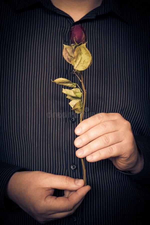 Manskjorta som rymmer den röda rosen royaltyfri fotografi