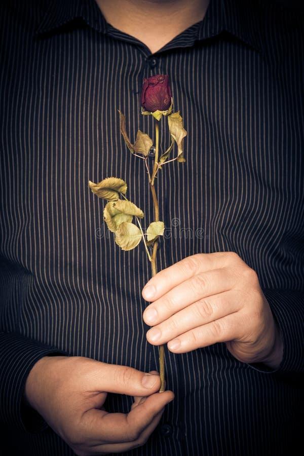Manskjorta som rymmer den röda rosen arkivfoto