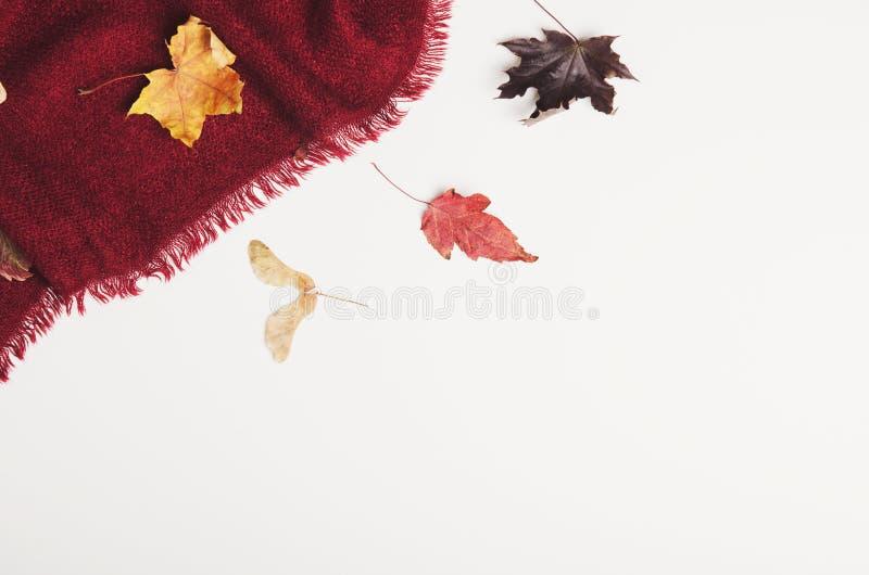 Manta acogedora caliente de Borgoña con las hojas de arce secas en el fondo blanco Ropa del invierno, interior Copie el espacio,  imagen de archivo