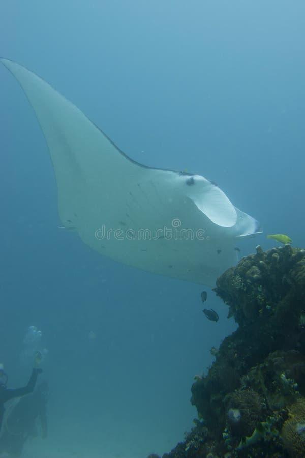 Manta in the deep blue ocean background