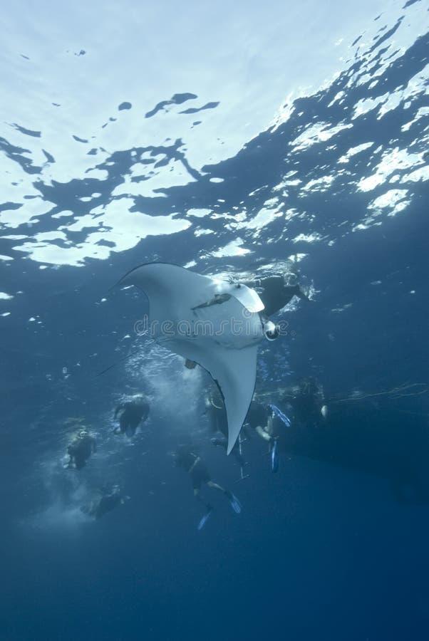 Free Manta Ray At The Surface. Royalty Free Stock Photography - 13865407