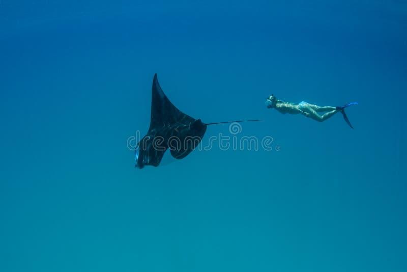 Manta Ray et plongeur libre en Indonésie photographie stock