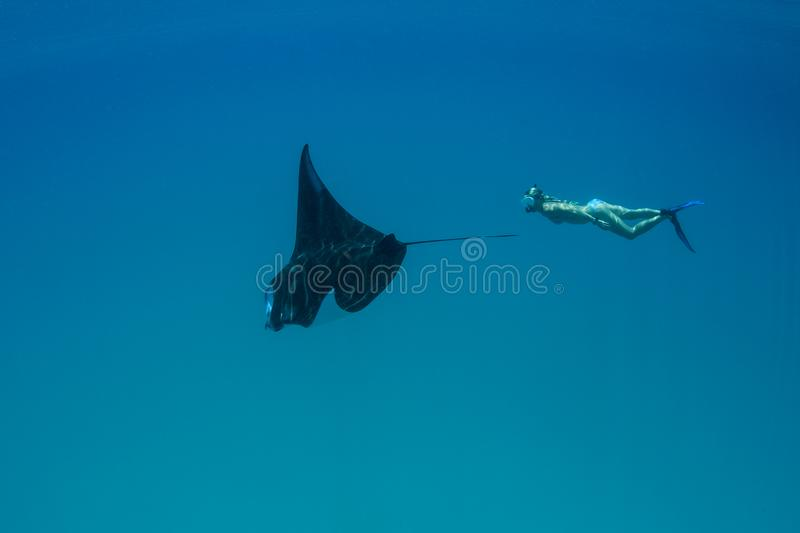 Manta Ray and Free Diver in Indonesia stock photography