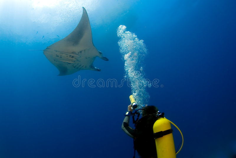 Manta ray with scuba diver. Underwater photographer