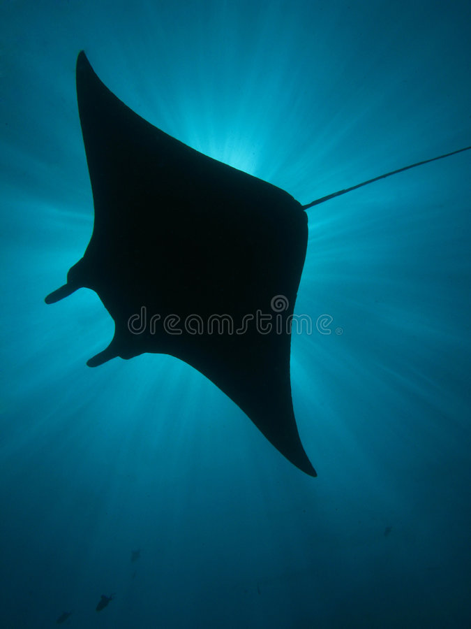 Manta Ray Silhouette stock images