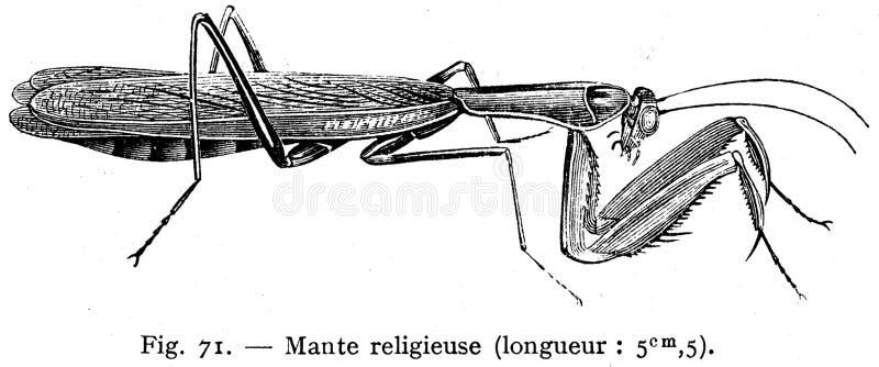 Mante Religieuse Free Public Domain Cc0 Image