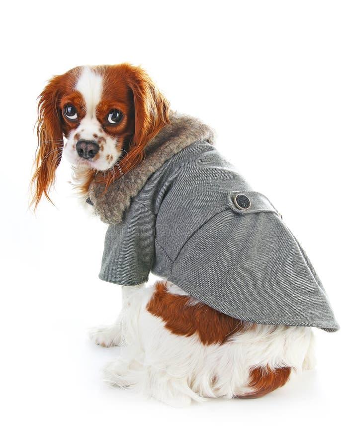 Manteau de chien Manteau de port d'hiver de chiot L'animal familier de veste de manteau de chien fournit le costume de chiot d'ha photo libre de droits