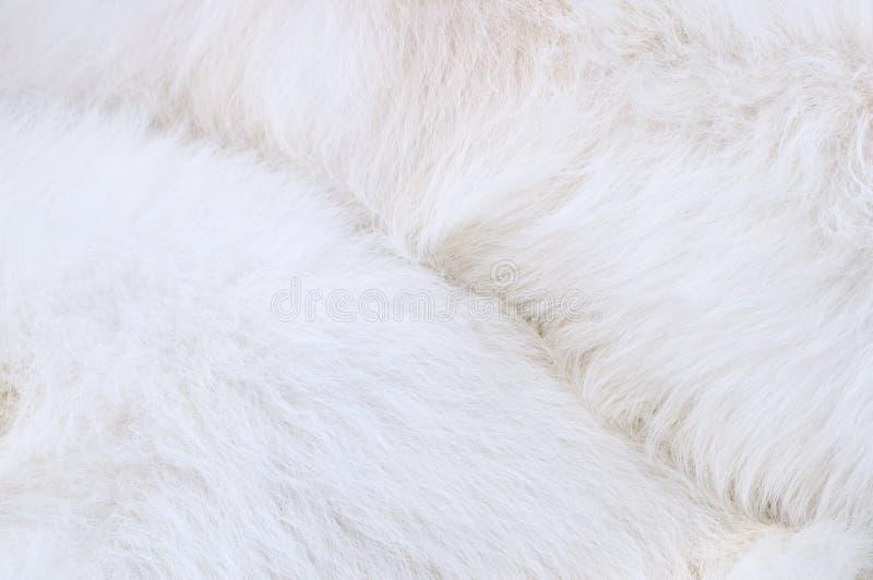 Mantel des Hundes