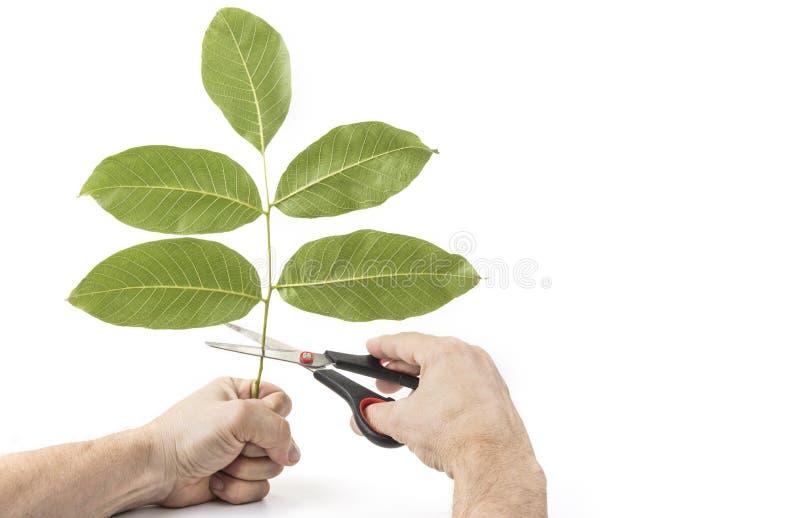 Mantenha o conceito do verde da terra Excepto o planeta fotografia de stock royalty free