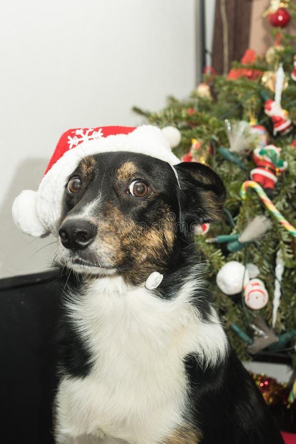 Mantenha para fora minha árvore de Natal!!! imagem de stock