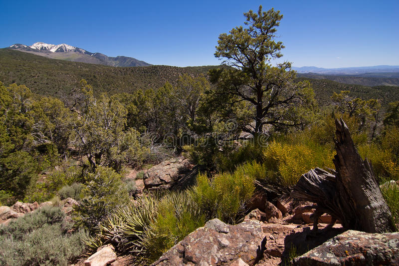 Manti-La Sal National Forest stock photo
