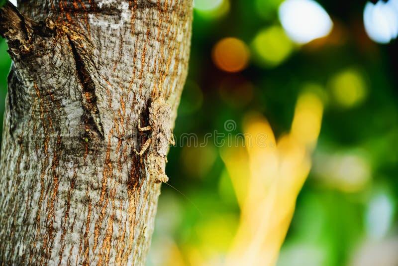 mantis royalty-vrije stock fotografie