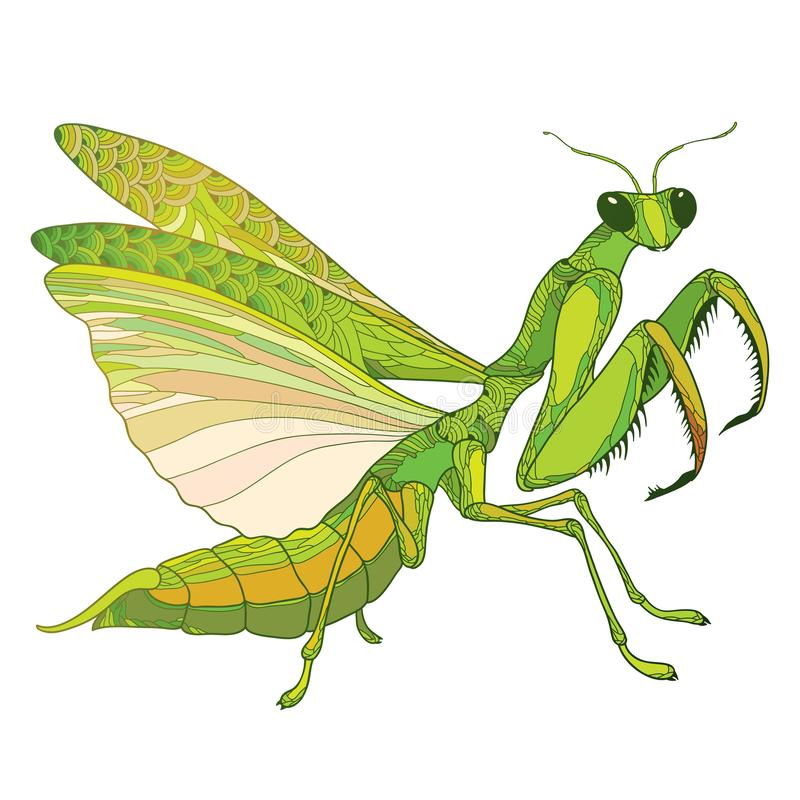 Vector outline Mantis religiosa or Praying Mantis in green isolated on the white background. Contour predatory insect with wings. Vector outline Mantis stock illustration