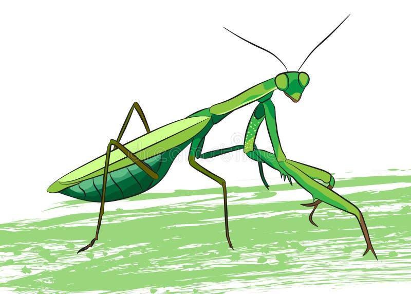 Mantis Praying ilustração do vetor