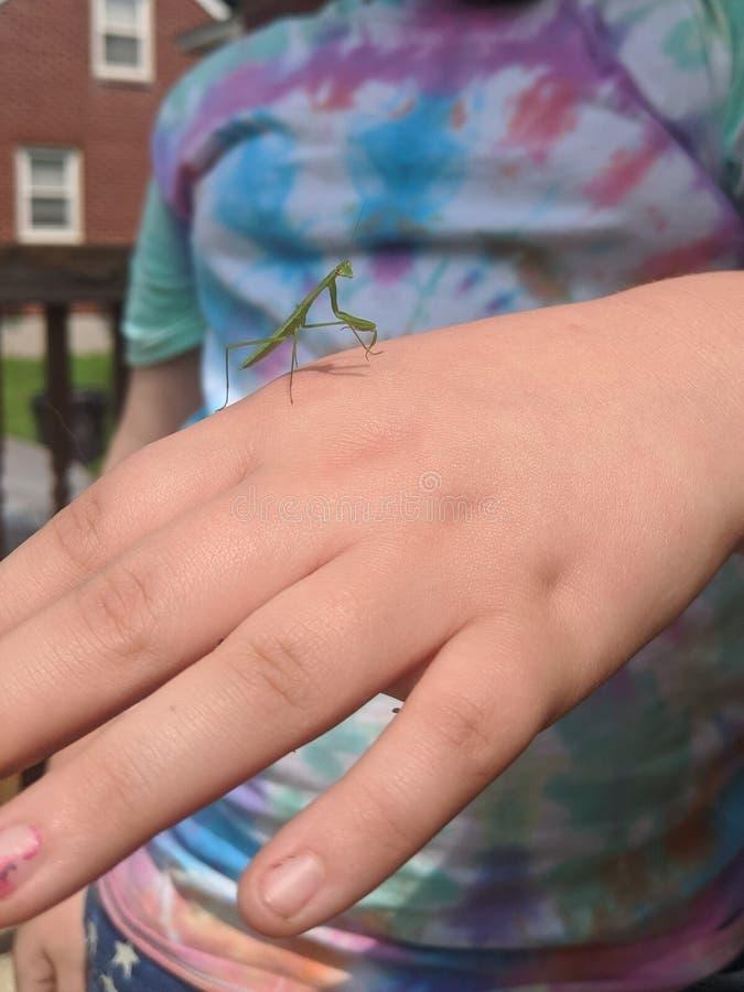 Mantis Praying do beb? fotos de stock royalty free