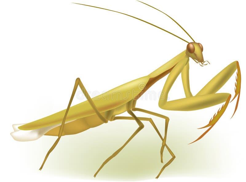 Mantis praying do inseto ilustração do vetor