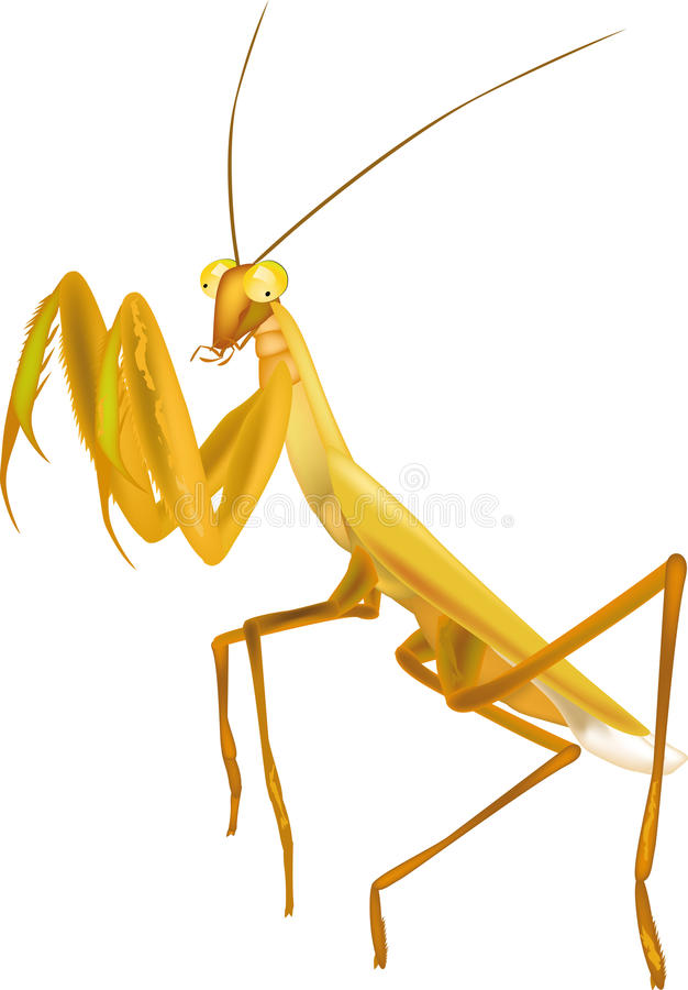 Mantis praying do inseto ilustração royalty free