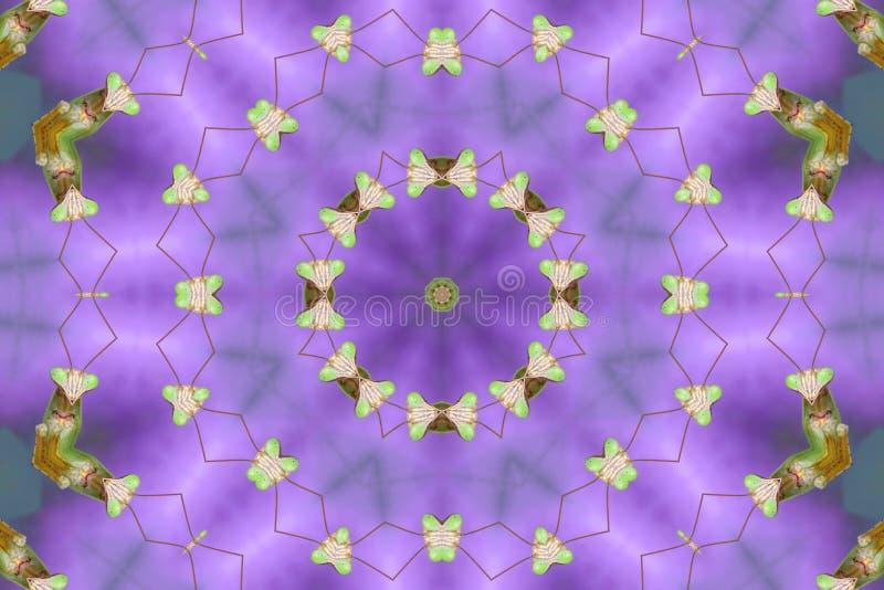 Mantis Praying Kaleidoscopic fotos de stock royalty free