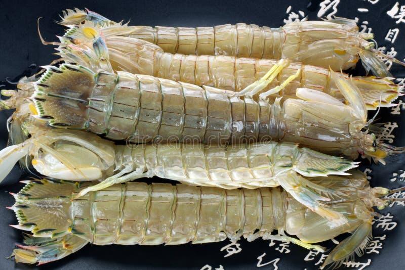 Mantis Shrimp stock image