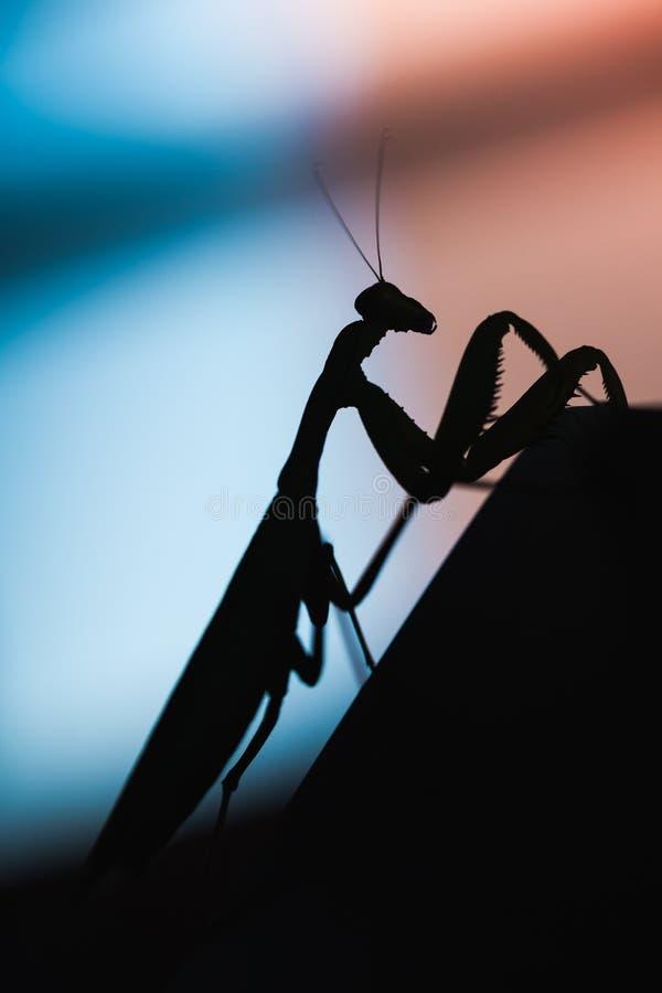 mantis Zwart insectsilhouet royalty-vrije stock fotografie