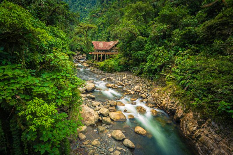 Manu National Park, Peru - August 05, 2017: Jungle lodge by a. Manu National Park, Peru - August 05, 2017: A jungle lodge by a river in Manu National Park, Peru royalty free stock images