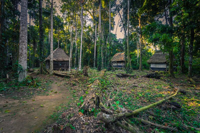 Manu National Park, Peru - August 07, 2017: Jungle lodges of Cocha Otorongo in the Amazon rainforest of Manu National Park, Peru. Manu National Park, Peru royalty free stock images