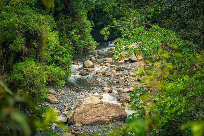 Manu National Park, Peru - August 05, 2017: Wild jungle of Manu. Manu National Park, Peru - August 05, 2017: The wild jungle of Manu National Park, Peru royalty free stock images