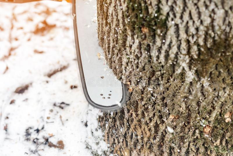 Manual chainsaw. Man hands, saws a tree in the woods in winter a. Manual chainsaw saws a tree in the woods in winter at sunset royalty free stock image