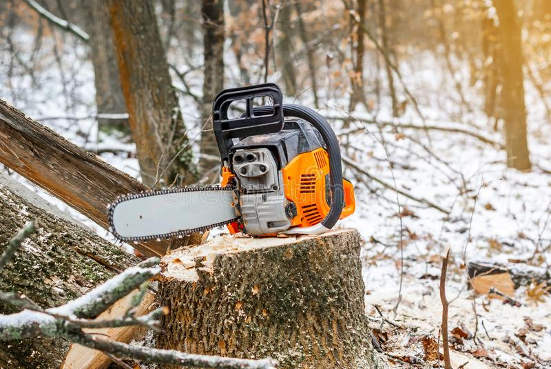 Manual chainsaw. Man hands, saws a tree in the woods in winter a. Manual chainsaw saws a tree in the woods in winter at sunset royalty free stock images
