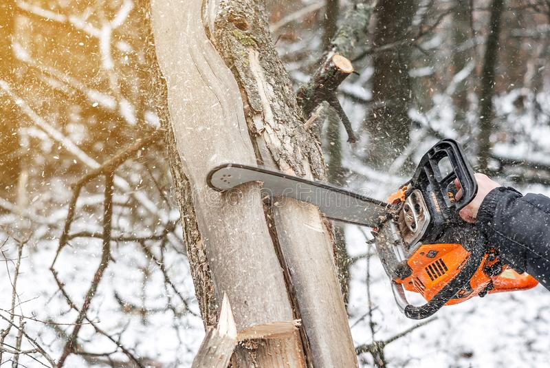 Manual chainsaw. Man hands, saws a tree in the woods in winter a. Manual chainsaw saws a tree in the woods in winter at sunset stock photos