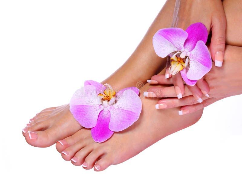 Manucure française sur les pieds et les mains femelles images stock