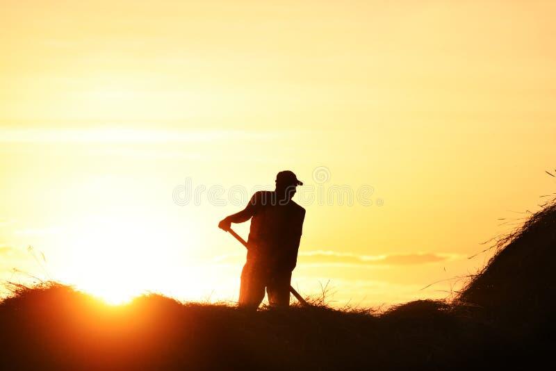 Manuell höplockningprocess Kontur av en man som samlar hö med en högaffel på bakgrunden av inställningssolen royaltyfri foto